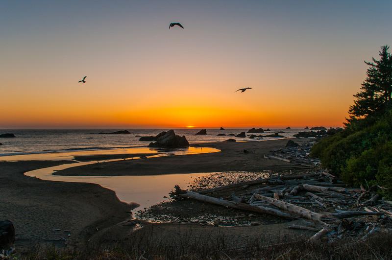 Willymoe - Oregon Coast