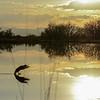 Endurodog - Sunset Landing