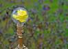 """JeffGroves - """"A flower bulb"""""""