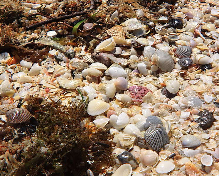 Samsplace - Shells -- Nature's History Channel