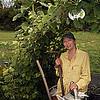 VisualXpressions - The Gardener