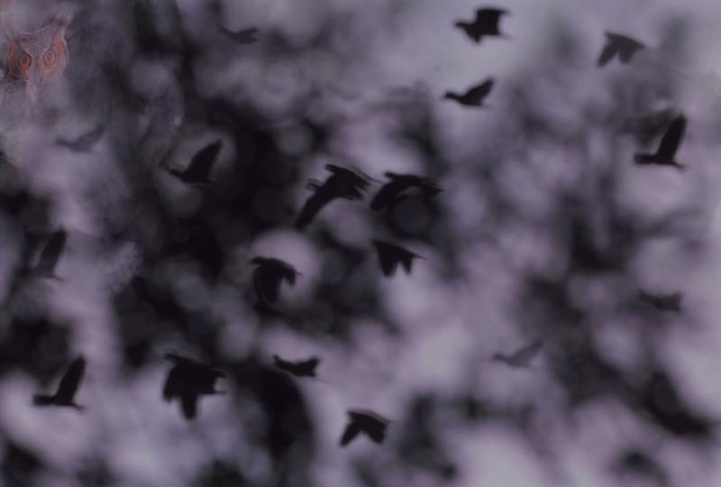 "jwear-- OWL GET YOU --the Birds from H--- <br /> photo <a href=""http://jwear.smugmug.com/photos/newexif.mg?ImageID=698841411&ImageKey=L8HJq"">http://jwear.smugmug.com/photos/newexif.mg?ImageID=698841411&ImageKey=L8HJq</a><br /> photo <a href=""http://jwear.smugmug.com/photos/newexif.mg?ImageID=698817993&ImageKey=5HHCD"">http://jwear.smugmug.com/photos/newexif.mg?ImageID=698817993&ImageKey=5HHCD</a><br /> exifs"