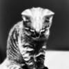 """mtnbiker - halloween kitten<br /> exif data    <a href=""""http://www.jonpratt.net/photos/newexif.mg?ImageID=698875142&ImageKey=y94EF"""">http://www.jonpratt.net/photos/newexif.mg?ImageID=698875142&ImageKey=y94EF</a>"""