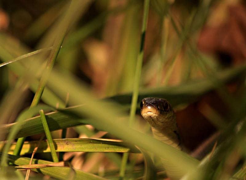 ic4u - Slithering Serpent