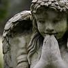 kinkajou - Angel