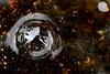 "CubistKat - On The Bubble<br /> <br /> <a href=""http://robmorse.smugmug.com/photos/newexif.mg?ImageID=712062411&ImageKey=WBBiV"">http://robmorse.smugmug.com/photos/newexif.mg?ImageID=712062411&ImageKey=WBBiV</a>"