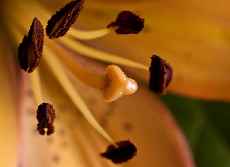 "pilznr - ""The Circle of Pollen"""