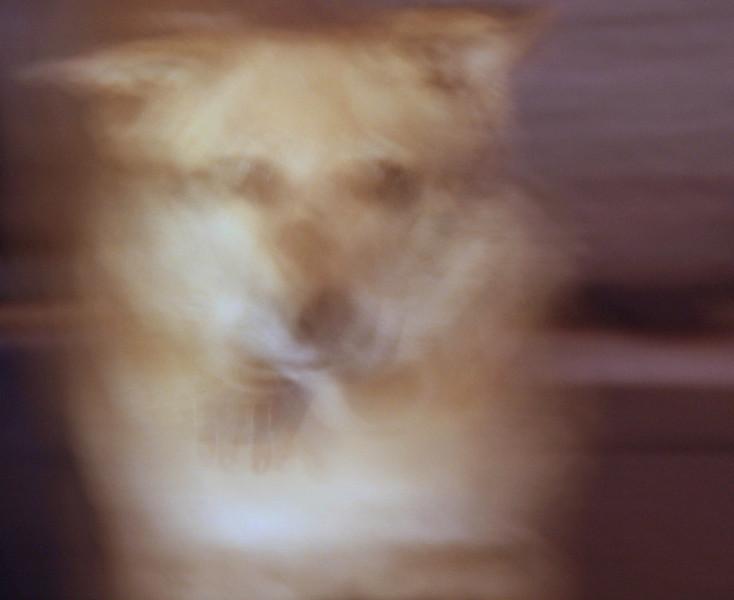 Raina.Rae - skittish dog