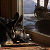 ic4u - Dogs Rule, Cats Drool
