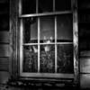 "Steve Wiencek - ""Miss Mouser"" - Queen Of The Barn"