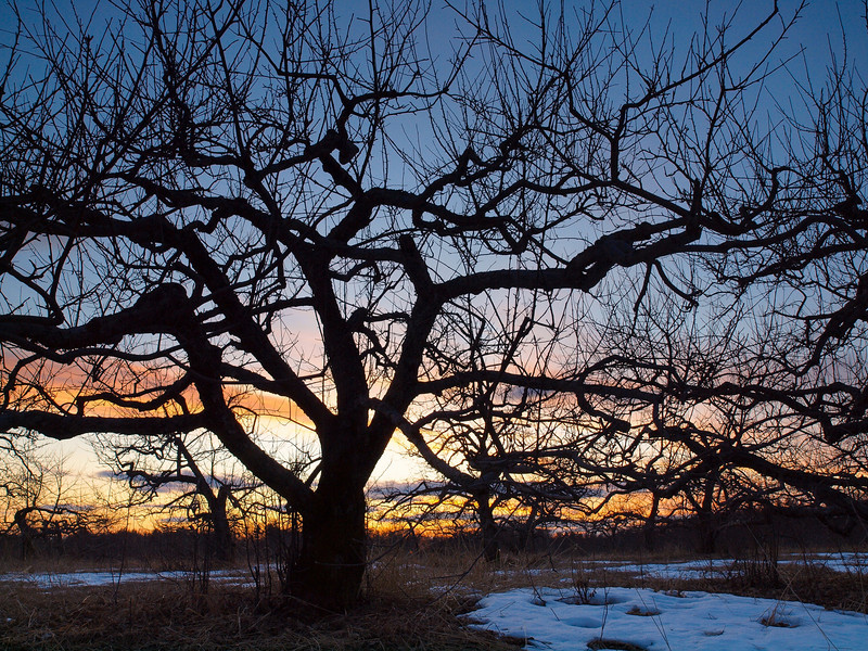 Wicked_Dark - Apple Tree Sunset Silhouette