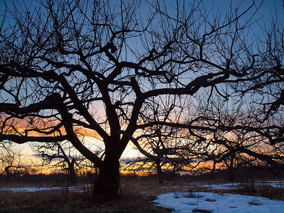 Wicked_Dark - Apple Tree Sunset Silhouette