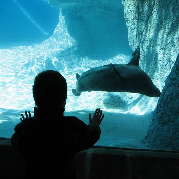 fotomom - Zoo View