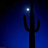dlplumer - Cactus Moon
