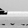 Oldtown_dreamer - geese, boat, FOG, grrr...
