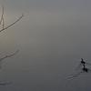 DeeCajun- Geese enjoying a foggy sunrise