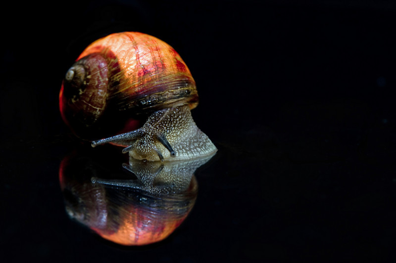 ChuBean - Snail and Shell, Together