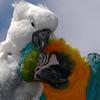 bfjr - Flock Mates