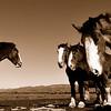 DsrtVW-Horse Sense