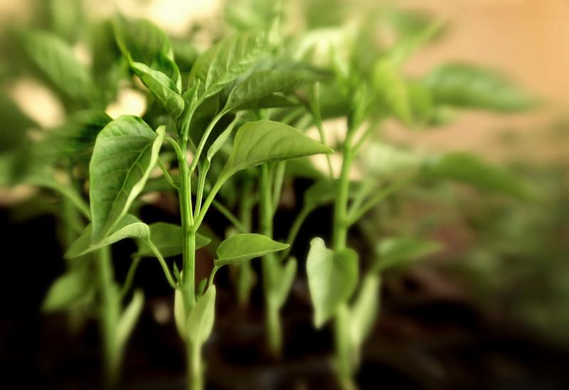 Kinkajou - Growing