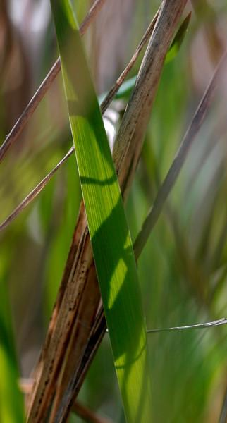 scas-Hierba Verde