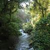 esc2476-Green Paradise