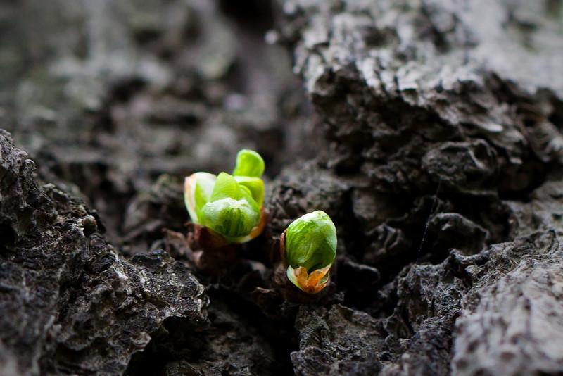 pemmett - spring time