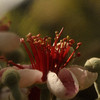 jwear - Love set match ,blooms
