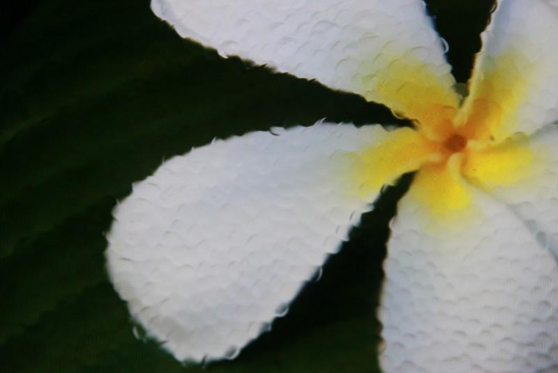 wats005 - Glass Flower
