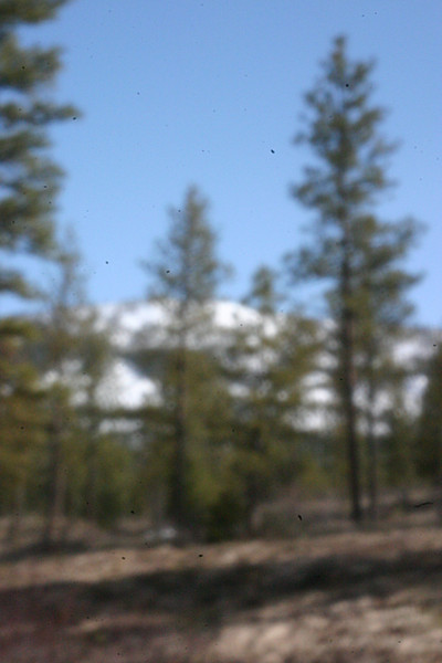scas - Spring in the Cascades<br /> Produced with home made plastic cup pinhole lens taped to the camera.