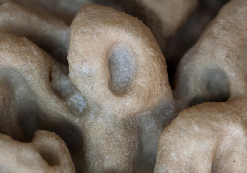CaiusMartius - The Coral Scream