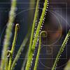 "quark - Sensing Spirals<br /> EXIF - <a href=""http://www.heatherdillon.com/photos/newexif.mg?ImageID=866841762&ImageKey=QGYqH"">http://www.heatherdillon.com/photos/newexif.mg?ImageID=866841762&ImageKey=QGYqH</a>"