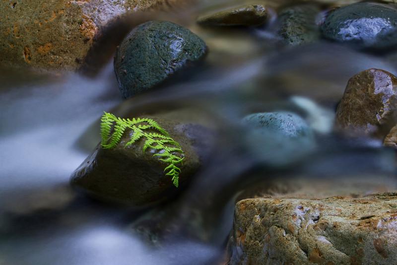 bradpowellphoto - Benson Creek Currents