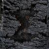 """jwear - JWear<br /> <br /> exifs here    <a href=""""http://jwear.smugmug.com/Other/drglet/12521928_quVMa#898528902_izhyX"""">http://jwear.smugmug.com/Other/drglet/12521928_quVMa#898528902_izhyX</a>"""