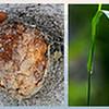 """JAG- Adonai <a href=""""http://jagcreations.smugmug.com/photos/newexif.mg?ImageID=886932224&ImageKey=sY9Jz""""target=""""_blank"""">EXIF A</a> <a href=""""http://jagcreations.smugmug.com/photos/newexif.mg?ImageID=886931744&ImageKey=pYdFv""""target=""""_blank"""">EXIF d</a> <a href=""""http://jagcreations.smugmug.com/photos/newexif.mg?ImageID=886931830&ImageKey=3eWr7""""target=""""_blank"""">EXIF o</a> <a href=""""http://jagcreations.smugmug.com/photos/newexif.mg?ImageID=886932254&ImageKey=g4W3K""""target=""""_blank"""">EXIF n</a> <a href=""""http://jagcreations.smugmug.com/photos/newexif.mg?ImageID=886932130&ImageKey=87snR""""target=""""_blank"""">EXIF a</a> <a href=""""http://jagcreations.smugmug.com/photos/newexif.mg?ImageID=886932302&ImageKey=5LHwn""""target=""""_blank"""">EXIF i</a>"""