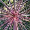 billiejean - Sunlit Stripes