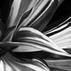 CDorothy - Flowing Stripes