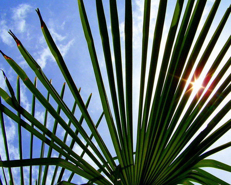 dnie - Palm Stripes