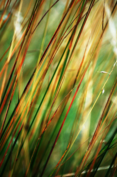 Johnloguk - The Grass and the Light