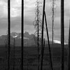 oldtown_dreamer - in nature's jail cell
