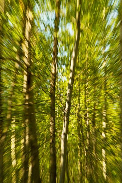 Aspecto5 - A Run Through the Forest