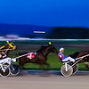 photo-bug - Harness race