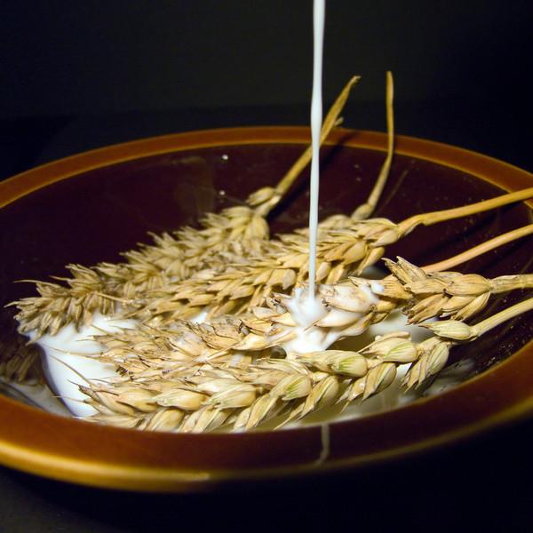 AndMan - 100% Whole Wheat