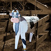 dlplumer - Best Dairy Cow In The Barn