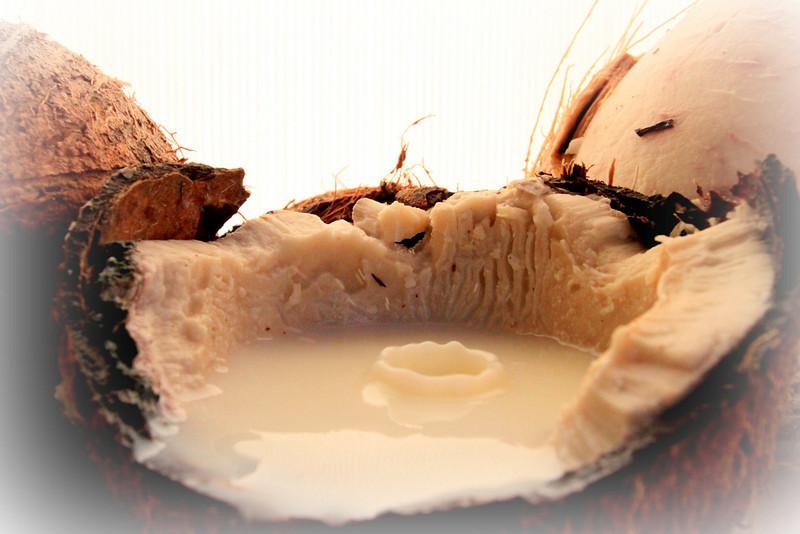 Silvereye - Coconut Milk