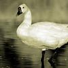 dlplumer - Golden Goose Leather