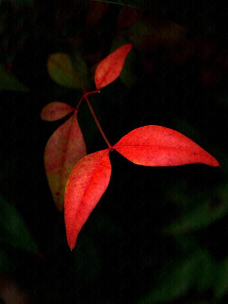 slpollett - Leaf Dancer