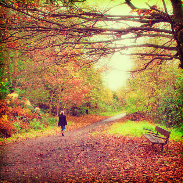 sam1461 - Autumn in Polaroid