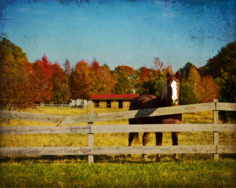 rteest42 - Hi, horsey