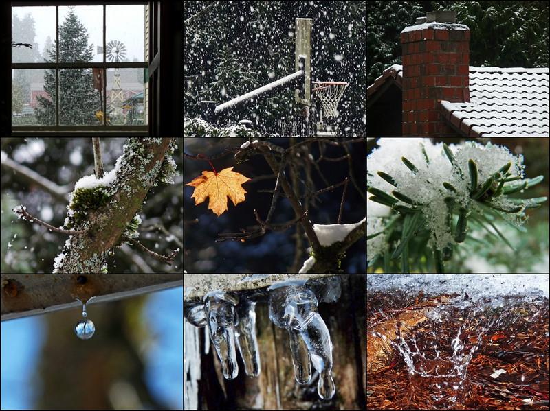 WhatSheSaw - First Snowfall
